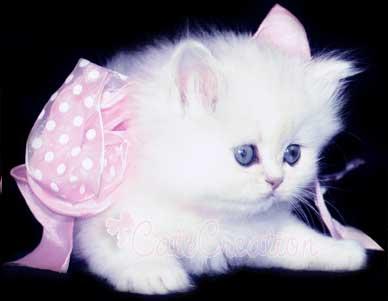 بالصور صور قطط كيوت , اجمل صور قطط رائعة 5727 1