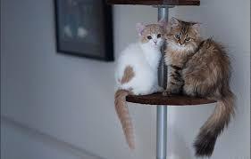بالصور صور قطط كيوت , اجمل صور قطط رائعة 5727 4