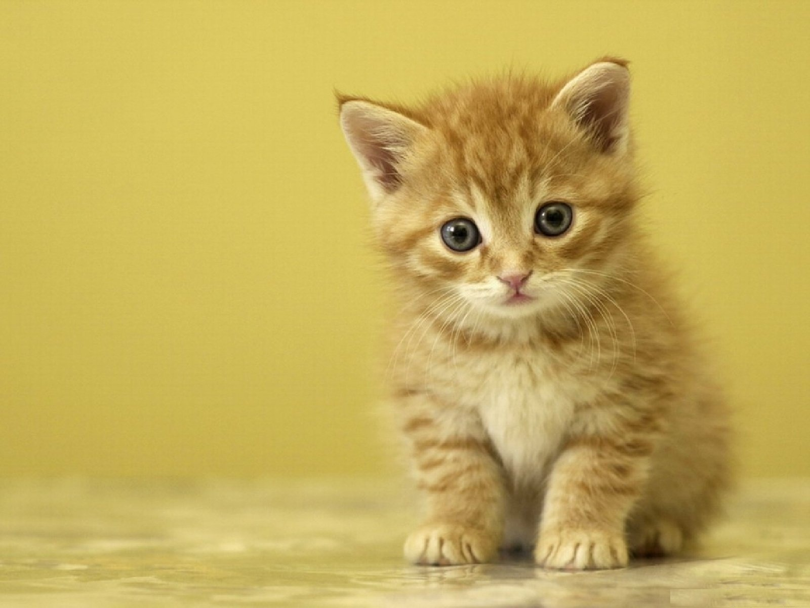 بالصور صور قطط كيوت , اجمل صور قطط رائعة 5727 5