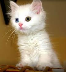 بالصور صور قطط كيوت , اجمل صور قطط رائعة 5727 6