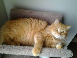 بالصور صور قطط كيوت , اجمل صور قطط رائعة 5727 8