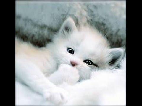 بالصور صور قطط كيوت , اجمل صور قطط رائعة 5727