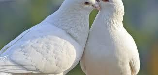 بالصور صور عن السلام , احلى صور للسلام 5750 4