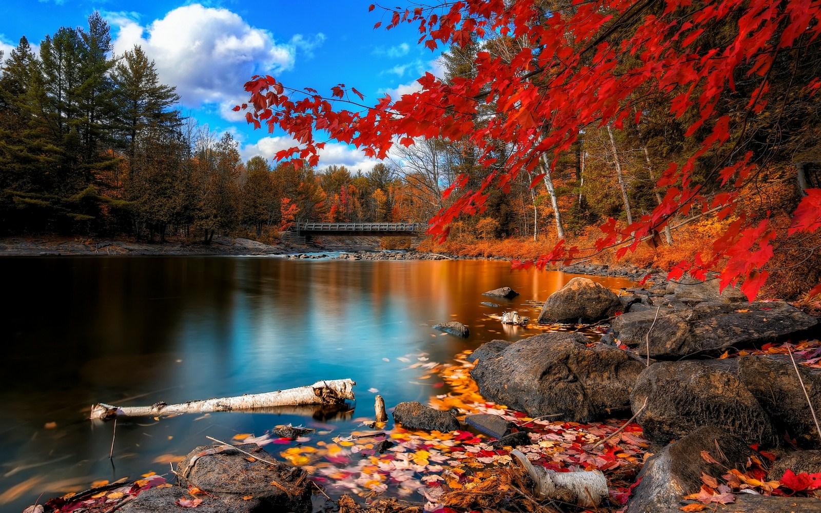 بالصور خلفيات طبيعة , اجمل صور لخلفيات طبيعية 5795 9