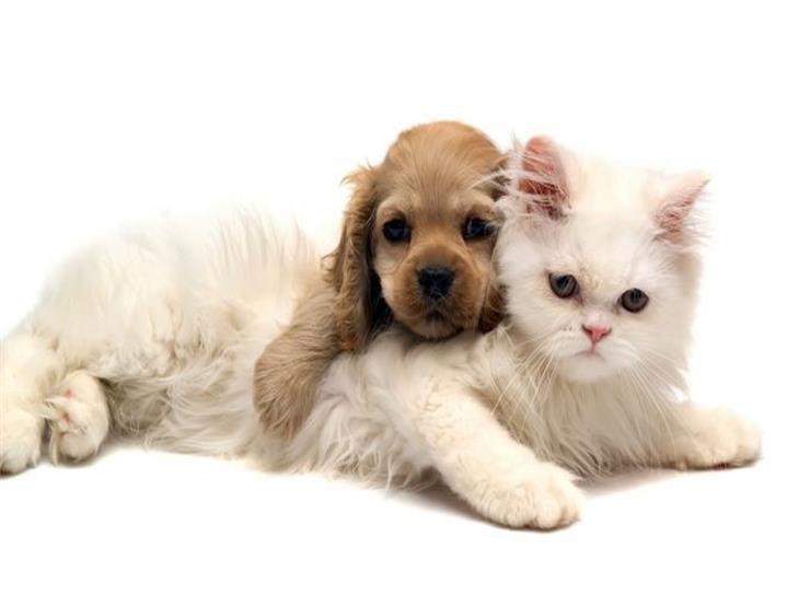 صور قطط وكلاب , اجمل صور للقطط والكلاب
