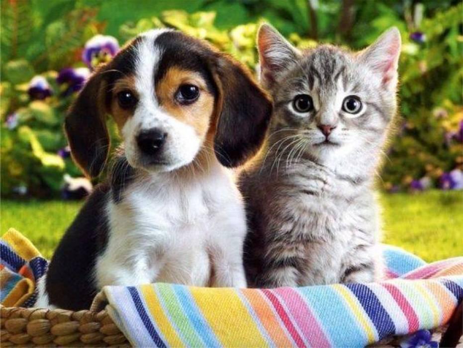 بالصور قطط وكلاب , اجمل صور للقطط والكلاب 5855 2