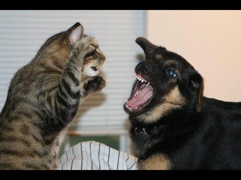 بالصور قطط وكلاب , اجمل صور للقطط والكلاب 5855 3