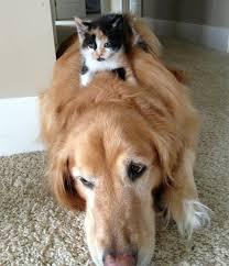 بالصور قطط وكلاب , اجمل صور للقطط والكلاب 5855 4