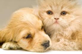 بالصور قطط وكلاب , اجمل صور للقطط والكلاب 5855 5