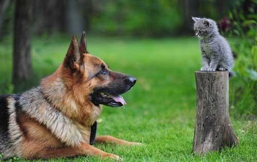 بالصور قطط وكلاب , اجمل صور للقطط والكلاب 5855 6