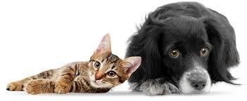 بالصور قطط وكلاب , اجمل صور للقطط والكلاب 5855 8