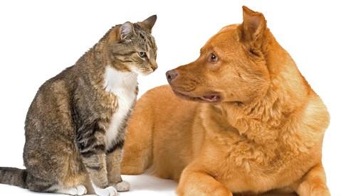 بالصور قطط وكلاب , اجمل صور للقطط والكلاب 5855 9
