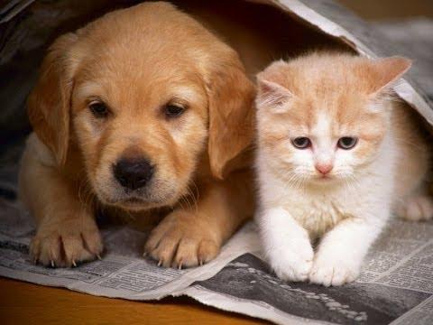 صوره قطط وكلاب , اجمل صور للقطط والكلاب