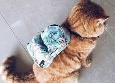 بالصور صور قطط مضحكة , اجمل صورة قطة جميله 4261 10 229x165