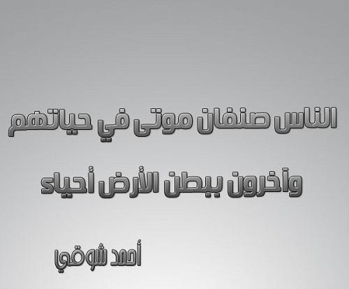 بالصور شعر احمد شوقي , من روائع الشاعر احمد شوقى 4391 6