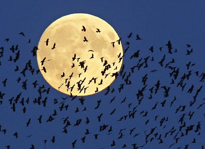 صوره اجمل صور للقمر , اروع صور جميله و رومانسيه للقمر