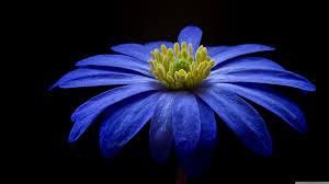 بالصور صور ازهار , اجمل صور للازهار 6253 3