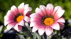 بالصور صور ازهار , اجمل صور للازهار 6253 5