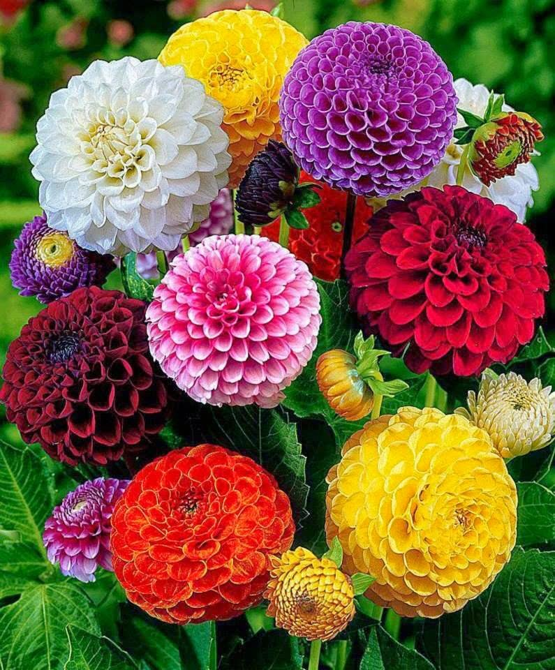 بالصور صور اجمل الورود , صور ورود روعه 1280 12