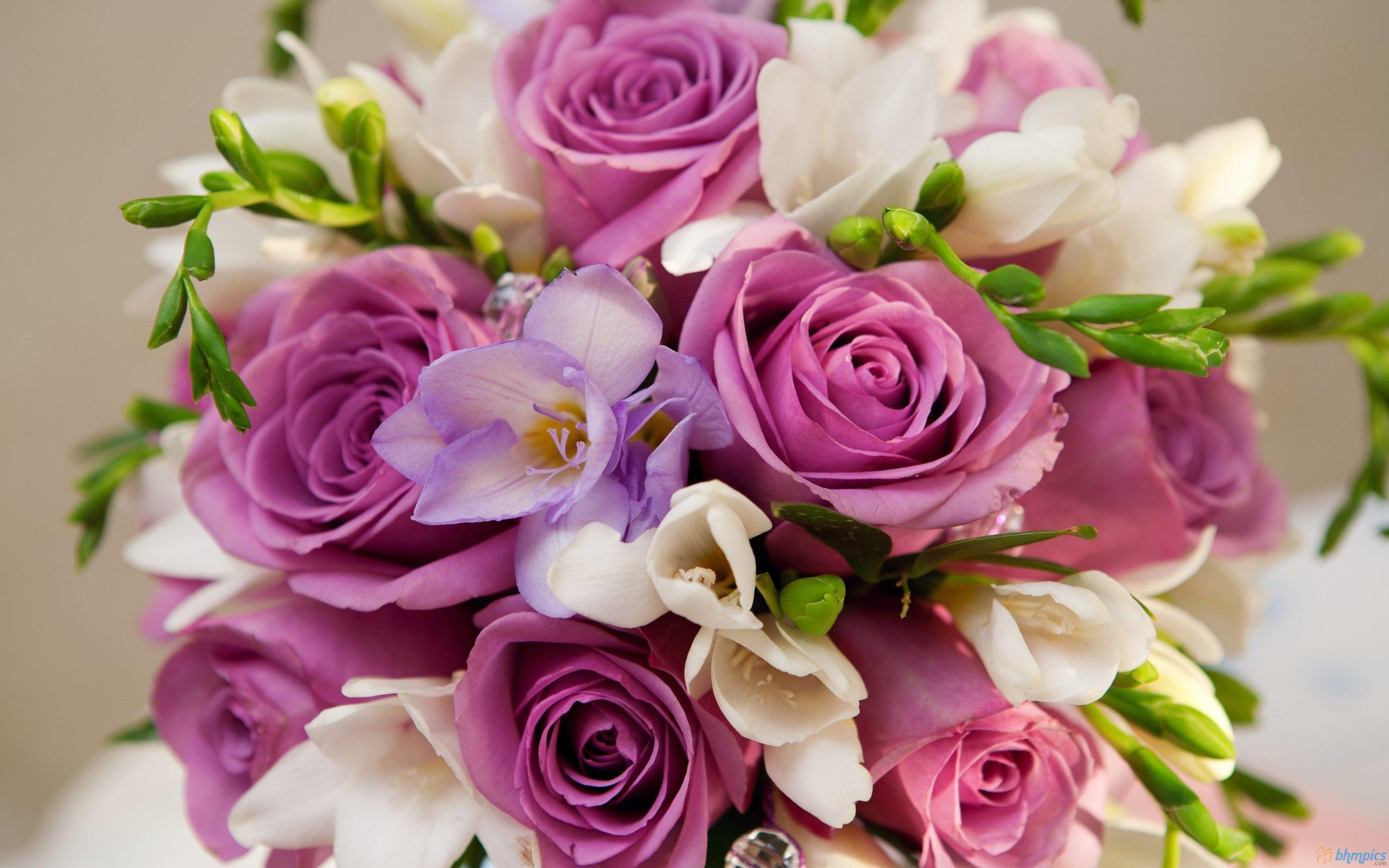 بالصور صور اجمل الورود , صور ورود روعه 1280 8