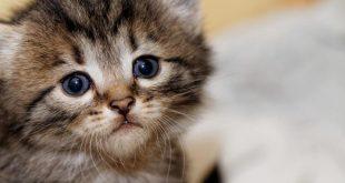 صورة صور قطط صغيرة , اجمل قطط صغيرة في العالم