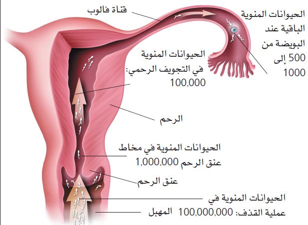 بالصور كيفية حدوث الحمل , طريقة للحمل السريع 2336
