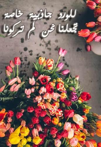 بالصور حكم عن الورد , اجمل الكلمات عن الورد 2437 7