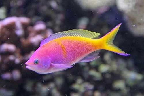 صور معلومات عن الاسماك , ما لا تعرفه عن السمك