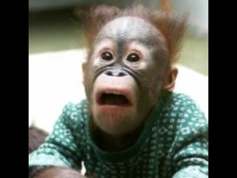 صور صور حيوانات مضحكة , اجمل صور الحيوانات المضحكة