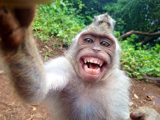 بالصور صور حيوانات مضحكة , اجمل صور الحيوانات المضحكة 2641 10