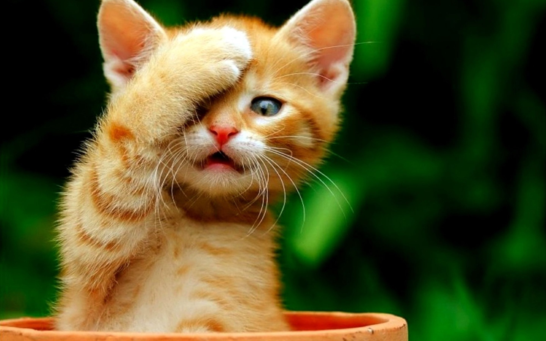 بالصور صور حيوانات مضحكة , اجمل صور الحيوانات المضحكة 2641 3