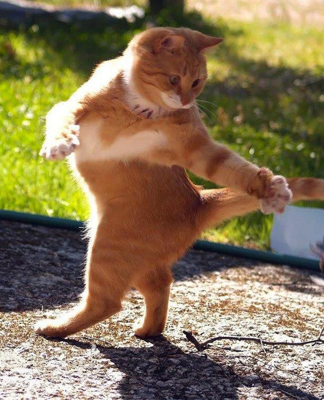 بالصور صور حيوانات مضحكة , اجمل صور الحيوانات المضحكة 2641 5