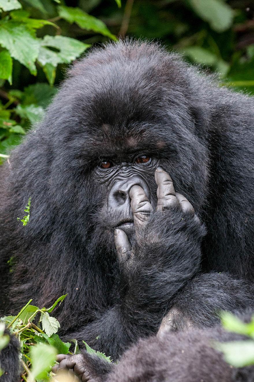بالصور صور حيوانات مضحكة , اجمل صور الحيوانات المضحكة 2641 7