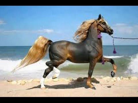 صوره اجمل خيول في العالم , تفاصيل عن الخيول