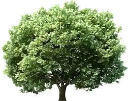 صورة صور اشجار , فوائد الاشجار في حياة الانسان