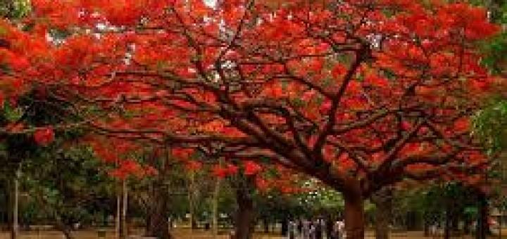 صوره صور اشجار , فوائد الاشجار في حياة الانسان
