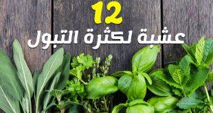 صوره علاج كثرة التبول بالاعشاب , كيفيه علاج كثرة التبول بالاعشاب