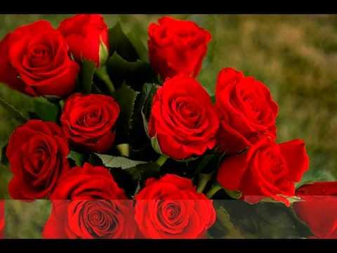بالصور اجمل الورود في العالم , انواع الورود في العالم 2854 4