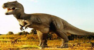 صوره معلومات عن الديناصورات , بحث وتفاصيل عن الديناصورات