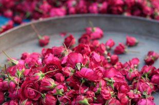 صورة خلفيات ورود جميلة جدا , اجمل صور زهور طبيعية جميلة