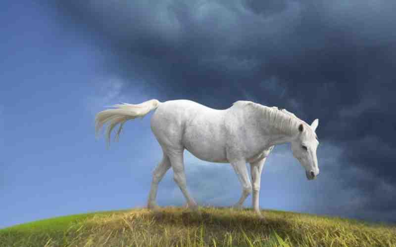 بالصور حصان عربي , مواصفات الخيل العربي الاصيل 3874 11