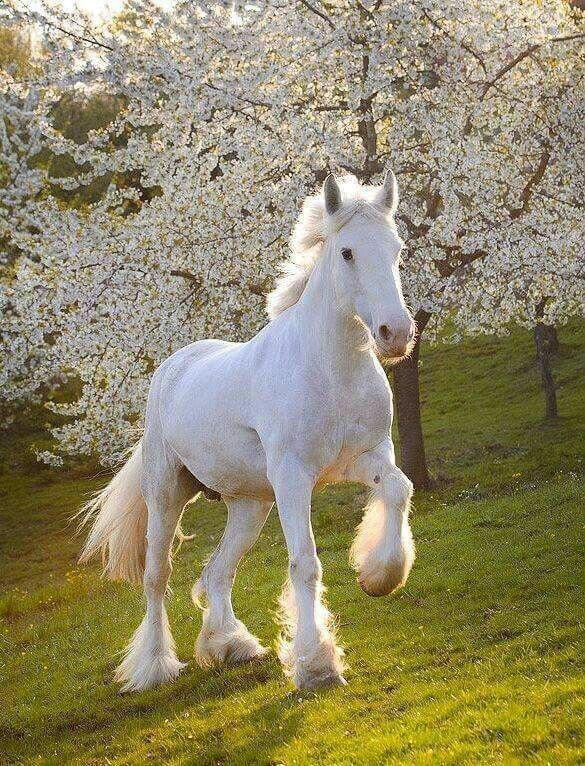 بالصور حصان عربي , مواصفات الخيل العربي الاصيل 3874 8