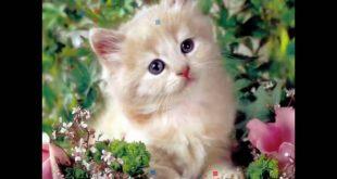 صور صور قطط جميلة , معلومات عن تربية القطط