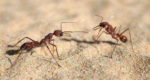 صوره معلومات عن النمل , معلومات شيقة عن النمل