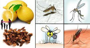 صوره القضاء على الناموس , طرق متعدده للتخلص من الناموس