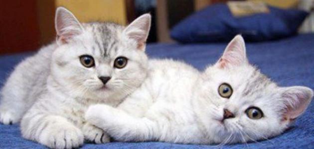 بالصور صور حيوانات , اجمل صور للحيوانات الاليفه بين يديك 4615 11