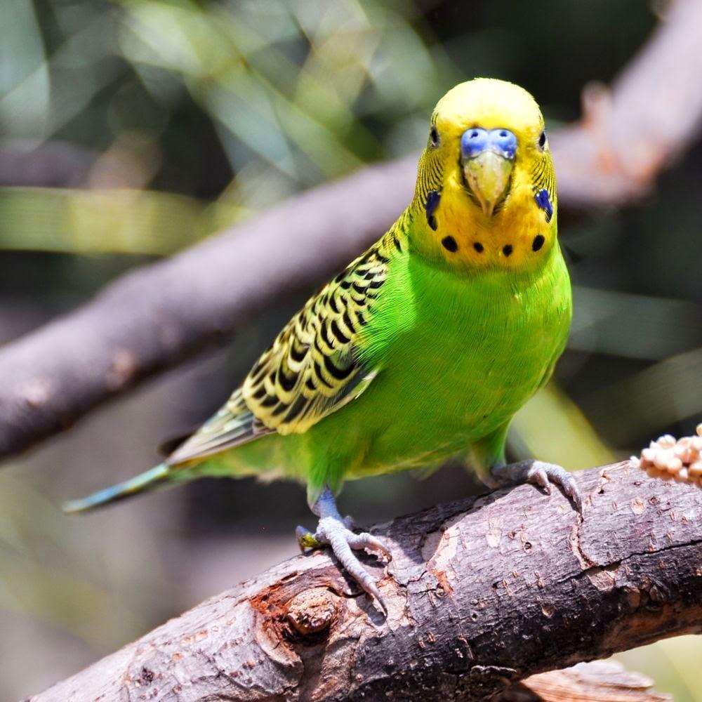 بالصور صور حيوانات , اجمل صور للحيوانات الاليفه بين يديك 4615 2