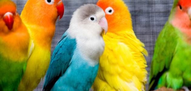 بالصور صور حيوانات , اجمل صور للحيوانات الاليفه بين يديك 4615 4
