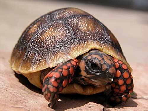 بالصور صور حيوانات , اجمل صور للحيوانات الاليفه بين يديك 4615 5