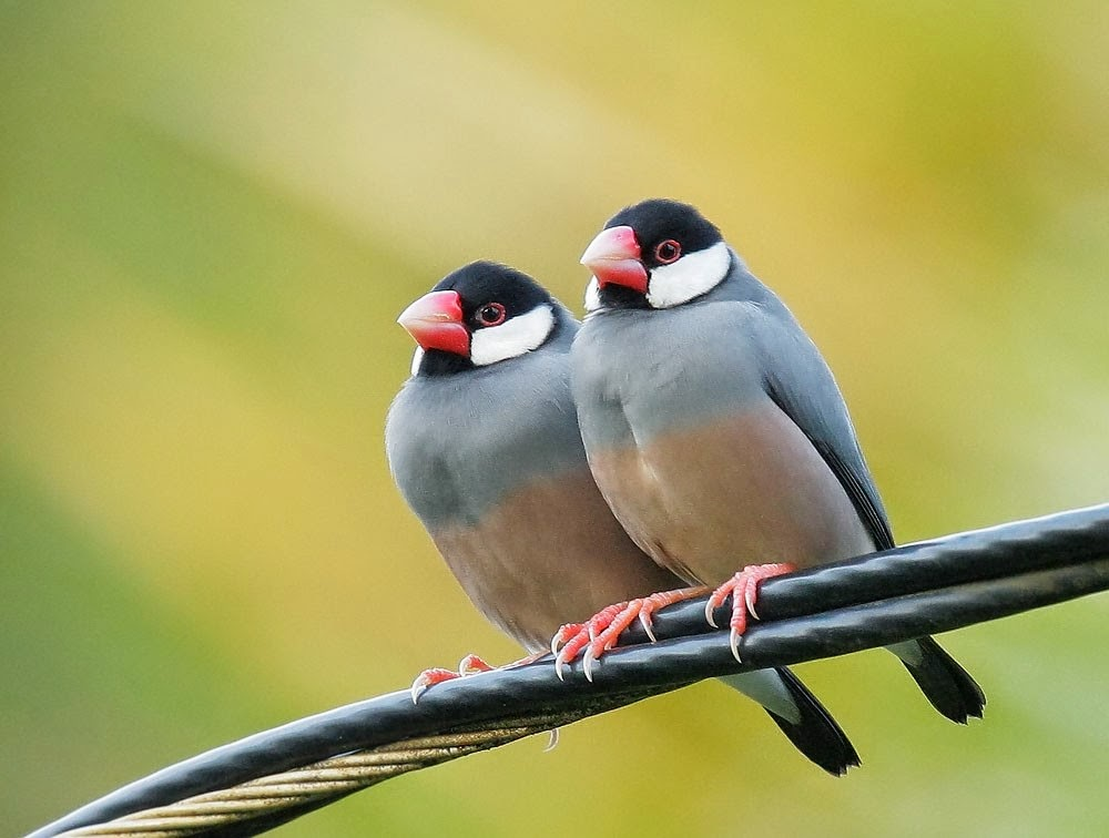 بالصور صور حيوانات , اجمل صور للحيوانات الاليفه بين يديك 4615 6